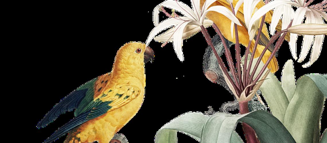 bird-4449891_640