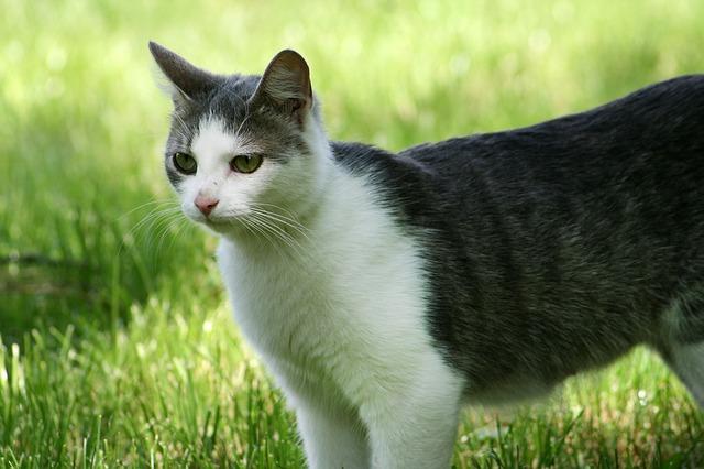 סאמיט מזון לחתולים
