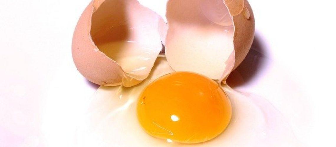egg-2147169_640